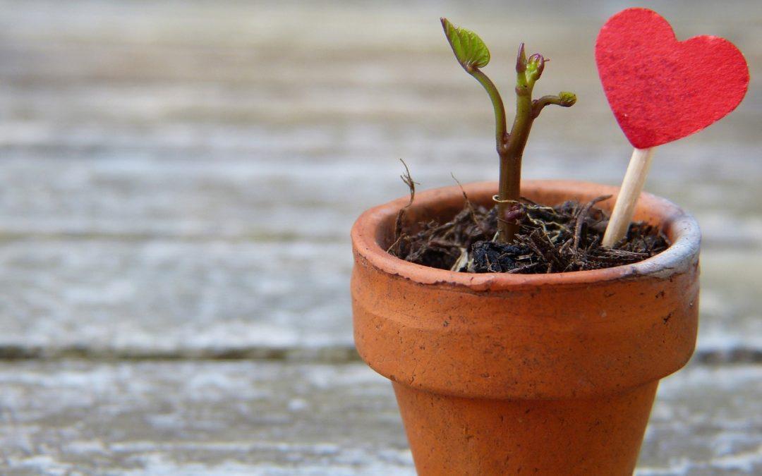 WebTorial 13 – Facilitates Client Growth